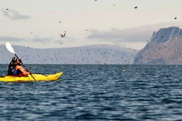 Kayaktour in Island