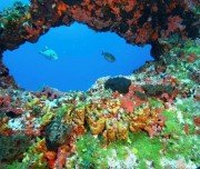 Bunte Korallen und Fische auf Noronha