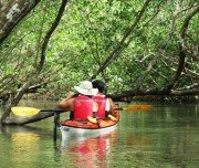 Mangroven im Saco de Mamanguá, Paraty, RJ