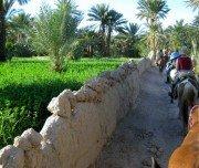 Durch die Oase reiten in Marokko