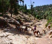 Reiten durch die Wälder im Mittleren Atlas - Marokko