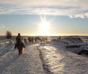 Reiterferien Erwachsene Winter