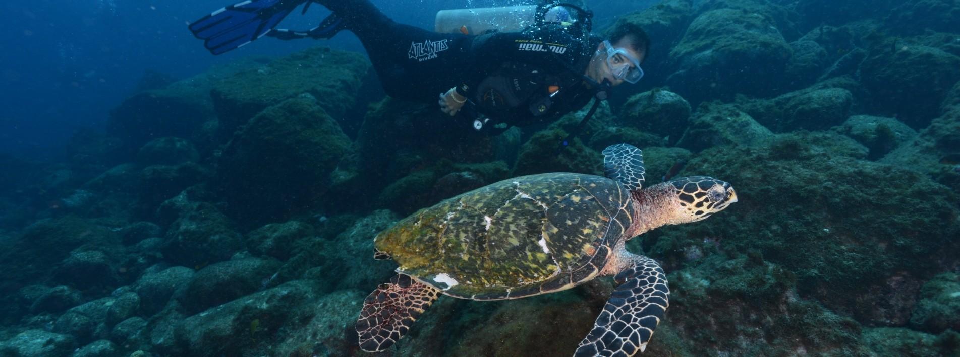 Tauchen mit Schildkröten, Fernando de Noronha