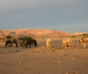 Reitexpedition mit campen, Marokko