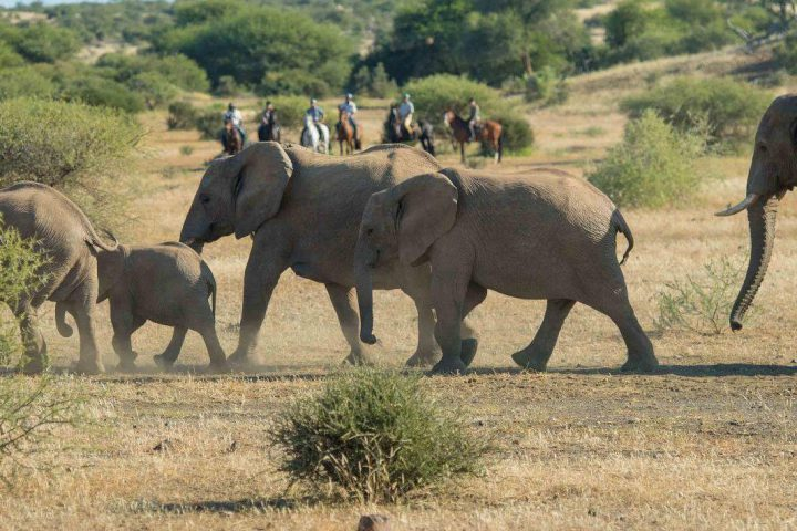 Nilpferd-Spotting: Reitsafari in Südafrika