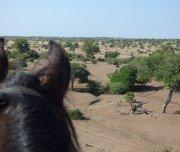 Elefanten bei Wanderritt in Botswana