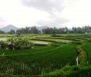Landwirtschaft auf Sumatra
