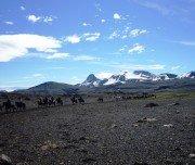 Reiten mit freilaufenden Pferden