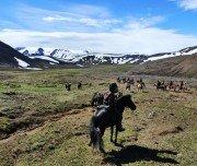 Pferdeherde im Hochland