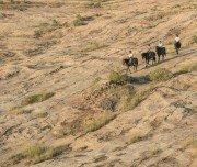 Über Felsformationen reiten im Tuli Block