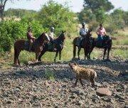 Hyäne Botwana