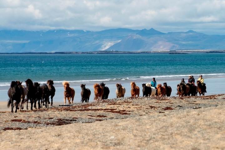 Reiten am Strand vonSnæfellsnes