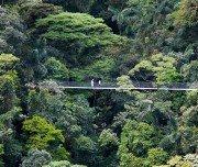 Hängebrücke bei El Arenal