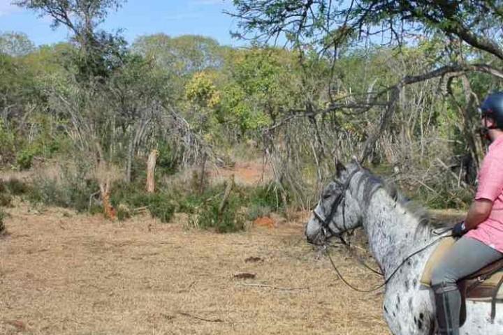 Giraffe auf Reitensafari in Südafrika