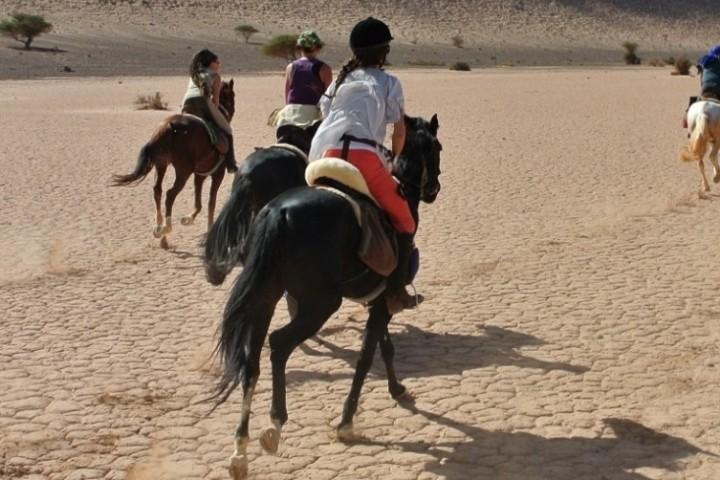 Schnelle Galoppaden in der Wüste