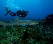 Tauchen mit Haien auf Fernando de Noronha