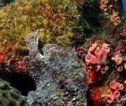 Korallen um Ilha Grande