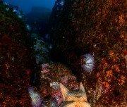 Seestern - Costa Verde, Brasilien