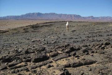 Wüsten-Wander-Ritt von Tata nach Akka, Marokko