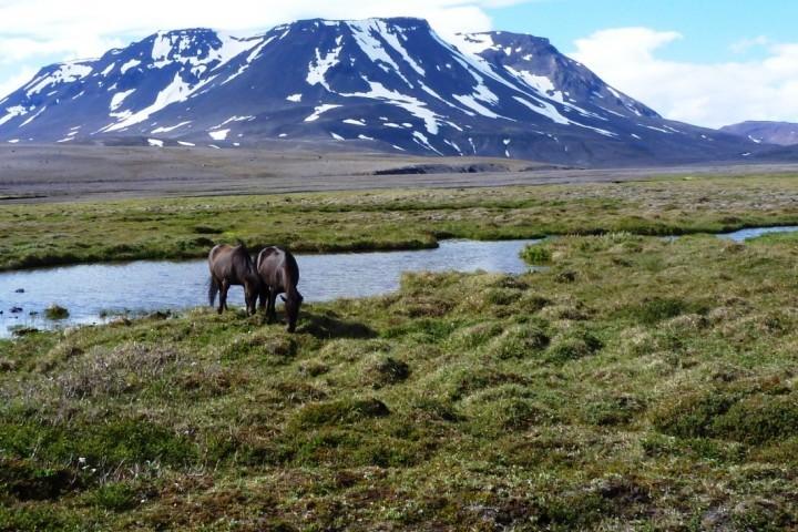 Urlaub im Hochland Islands