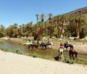 Erfrischung im Palmenhain, Marokko