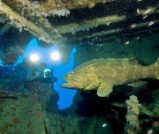 Unterwasserfauna vor der Küste Maceiós