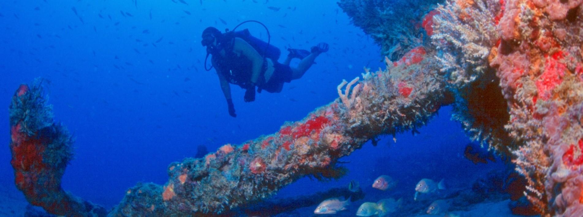 Wunderbare Unterwasserwelt, Brasilien
