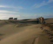 Reitexpedition durch die Wüste, Marokko