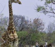 Wildlife - Sichtung - Reitsafari Südafrika