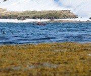 Vogelbeobachtung beim Kajakfahren