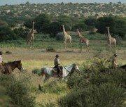 Giraffen-Spotting: Reitsafari Afrika