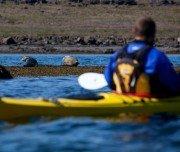 Robben auf der Kajakreise in Island