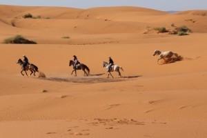 Galoppieren in den Sanddünen der Erg Chebbi