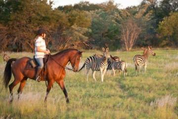 Zebras auf Reitsafari in Südafrika