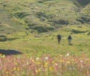 Wandern im Grünen auf Island