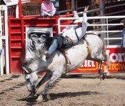 Rodeo-Besuch in Kanada