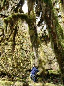Moosbewachsene Bäume im Regenwald