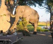Mittagessen mit Elefantenbesuch