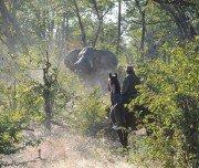 Begegnung mit Elefanten