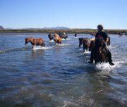 Durchquerung eines Flusses mit den Pferden