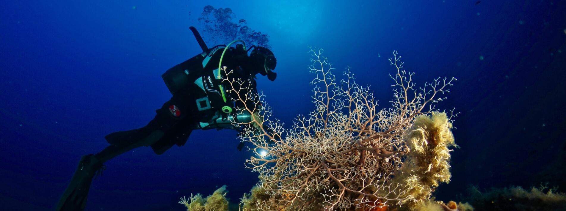 Unterwasserwelt um Elba