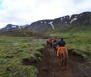 Tagesausritt auf Isländern