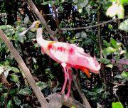 Vogelwelt in Rio Lagartos