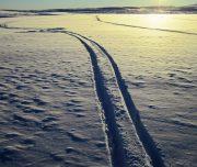 Spuren ziehen im Schnee