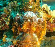 Unterwasserwelt Sulawesi