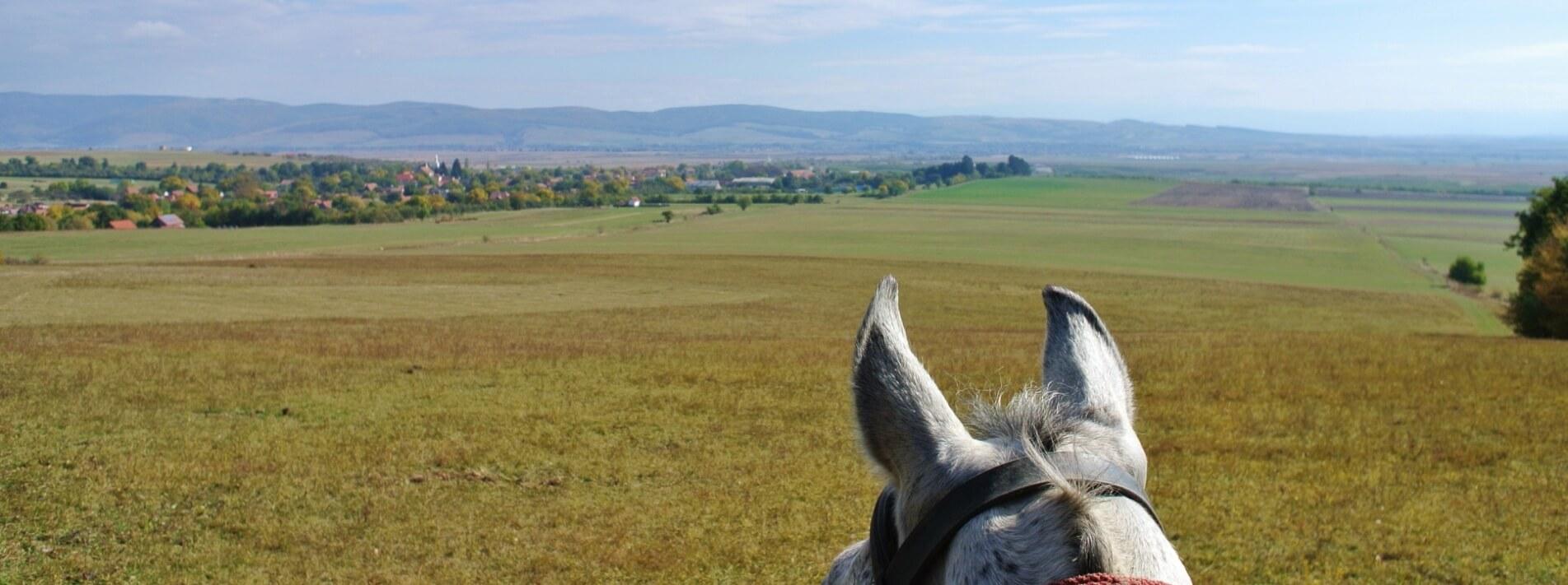 Aussicht auf Landschaft vom Pferderücken