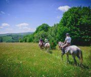 Reiten auf saftigen Weiden
