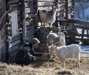 Traditionelle Farm in Norwegen